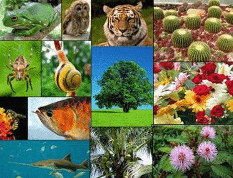700 Gambar Flora Dan Fauna Benua Amerika HD