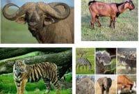10+ Gambar hewan insektivora terbaru