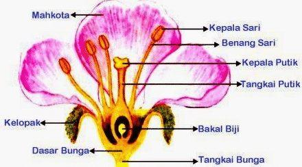 gambar bagian-bagian bunga