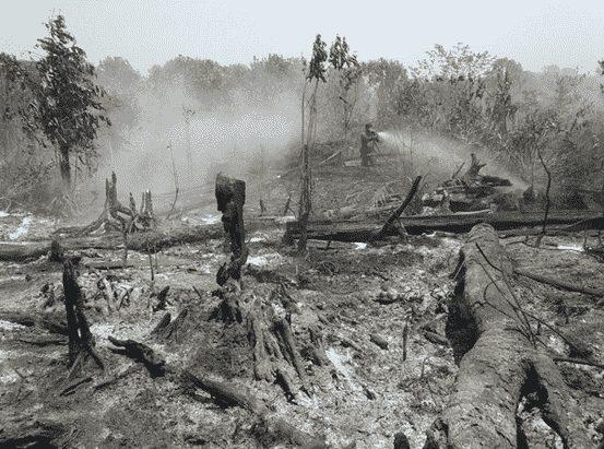 gambar dampak kebakaran hutan