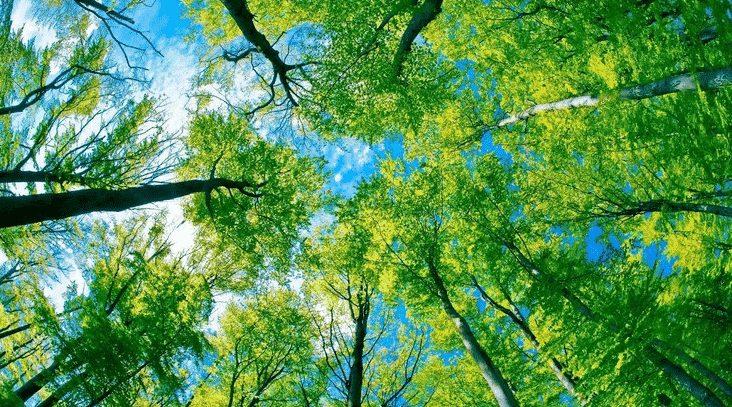 gambar pengertian lingkungan hidup