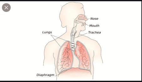 Gangguan Diafragma : Fungsi dan Cara Memahaminya