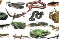 Pengertian-Amfibi-:-Ciri,-Struktur,-dan-KlasifikasinyaPengertian-Amfibi-:-Ciri,-Struktur,-dan-Klasifikasinya