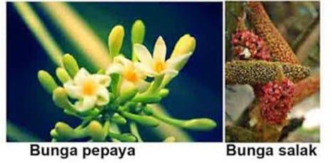 Bunga Tidak Sempurna