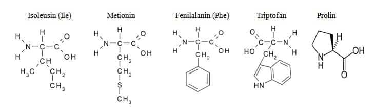 Struktur Kimia 20 Asam Amino