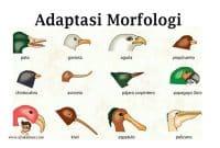 adaptasi-morfologi