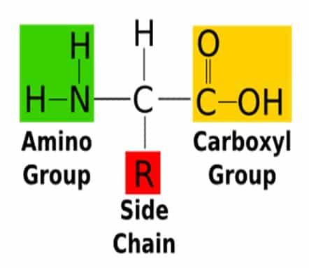 asam amino Group-R