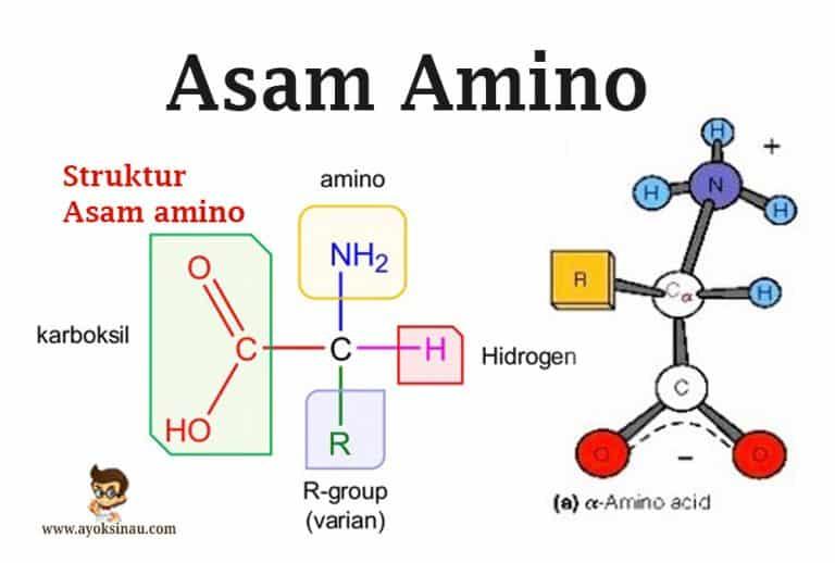 pengertian-asam-amino