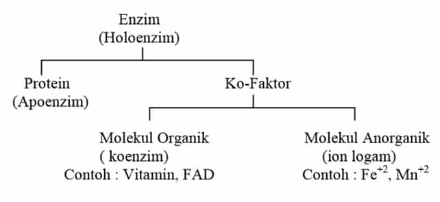 Komponen Penyusun Enzim