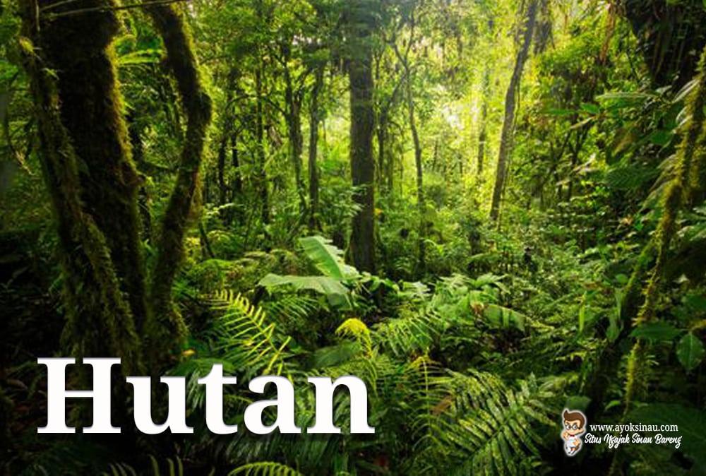 Macam-Hutan-Indonesia
