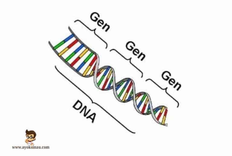 Pengertian-dan-Sifat-Gen-beserta-Fungsinya