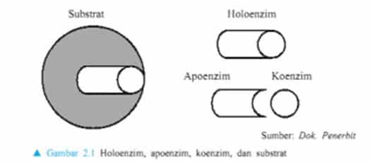 Substansi protein dalam enzim