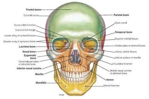 Tulang Tengkorak (Cranium)