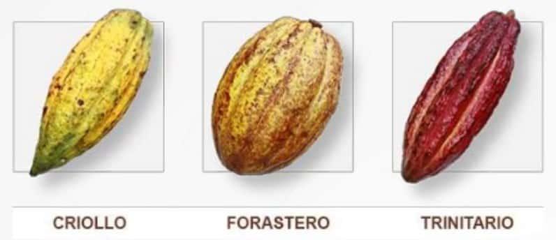 jenis Kakao
