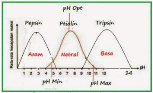 pengaruh pH terhadap aktivitas enzim