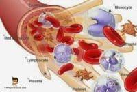 Komponen-Penyusun-Darah-Manusia