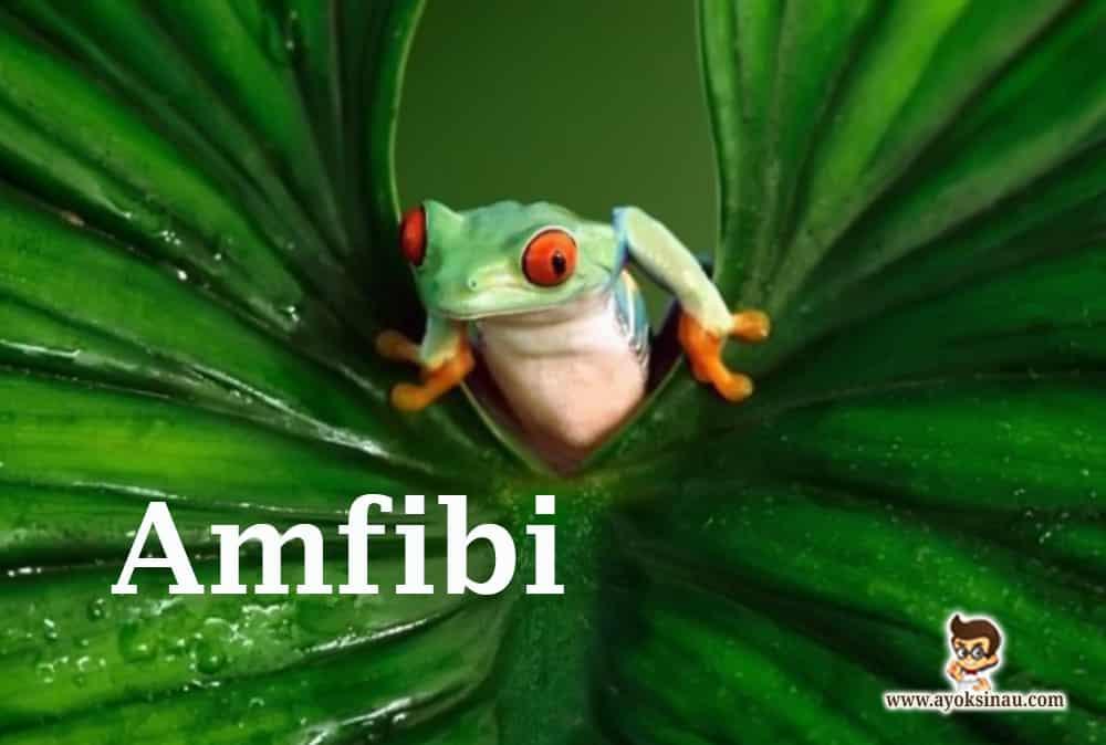 Pengertian-Amfibi
