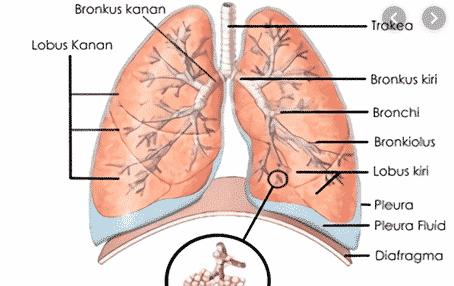 Penyebab Diafragma Terganggu
