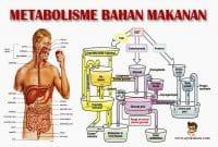 pengertian-Metabolisme