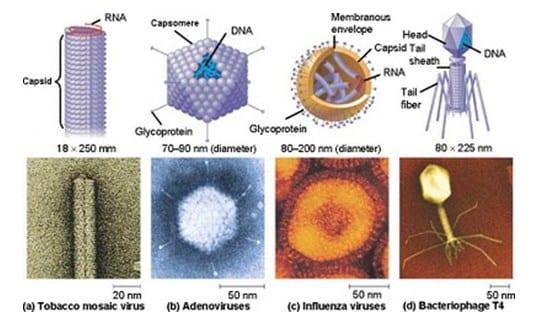 Virus Hewan dan Tumbuhan