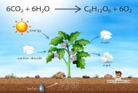 pengertian-fotosintesis